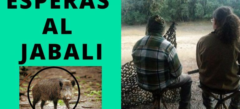 ESPERAS NOCTURNAS AL JABALI