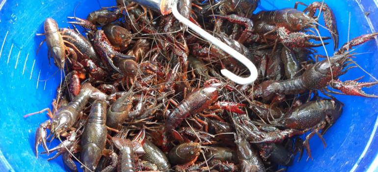 imagen pesca de cangrejos